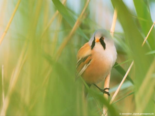 Straßengraffiti Freitag, 23.7. um 12:30 Uhr am Bahnhof Bamberg: Fridays for future